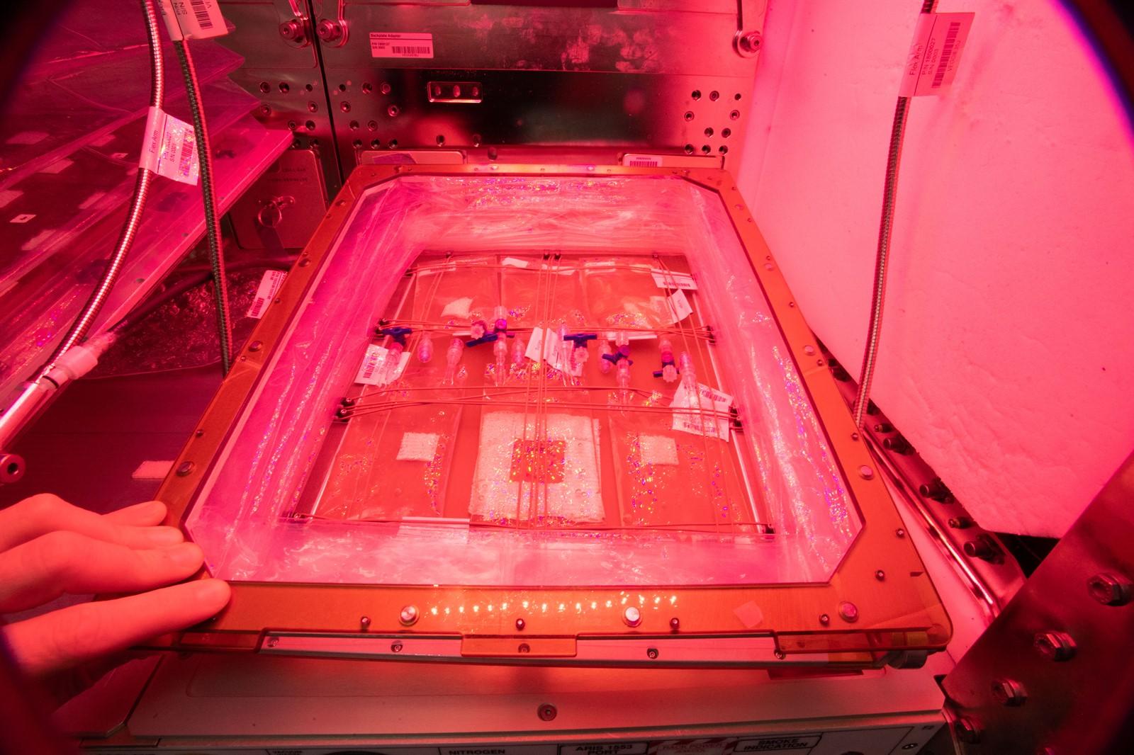 space algae culture bags 1600
