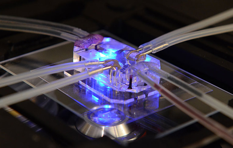 tissue lung on chip